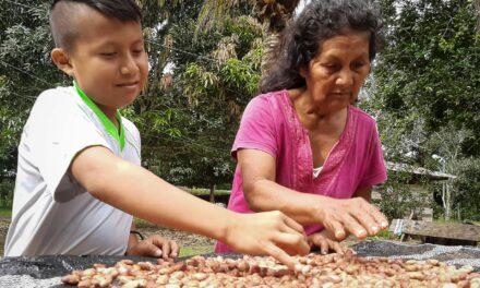 Comuneros lanzan al mercado su marca comercial de castaña Morick´ke Amarakaeri