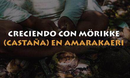 Aprovechamiento sostenible de castaña en la Reserva Comunal Amarakaeri