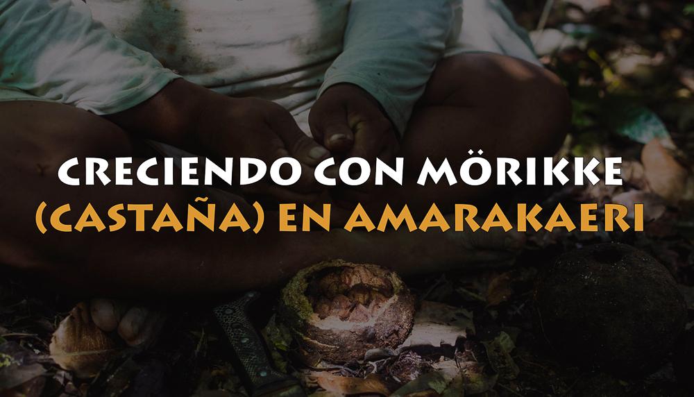 Una de las principales actividades que se desarrollan dentro de la cogestión de la Reserva Comunal Amarakaeripara la mitigación, adaptación y resiliencia al cambio climático es el aprovechamiento sostenible de castaña (Morikke, en Harakbut).
