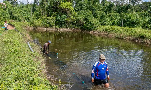 Cogestión de Amarakaeri fortalece piscicultura en Queros Wachiperi a través del PNIPA