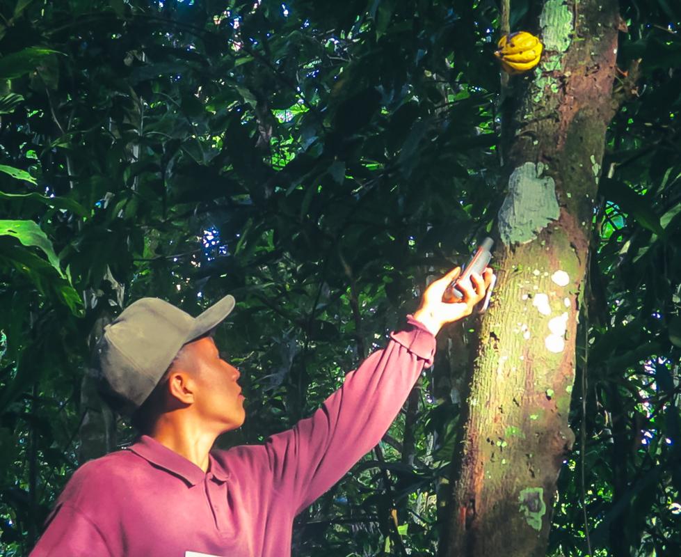 Dentro del territorio comunal de Puerto Luz se hallaron 14 especies de caco nativo
