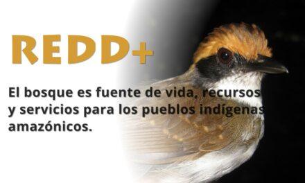 Red Indígena Amazónica en la Reserva Comunal Amarakaeri