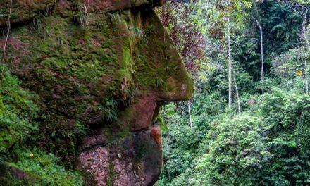 Conservación con participación de los pueblos indígenas