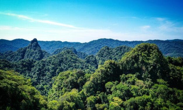 Amarakaeri, el bosque que integra vida